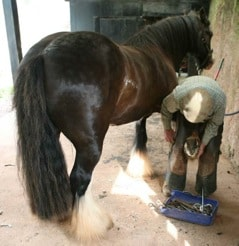 Farrier with Horse